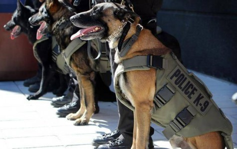 Though a new organization, Spike's K9 Foundation is on its way to a busy 2016