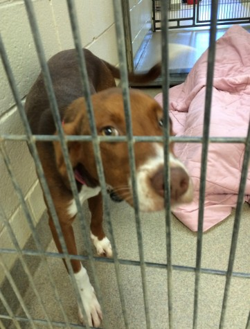 Help Needed at the VBSPCA