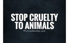 Animal Cruelty: Where does it begin?
